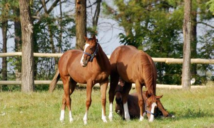 Do Foals, Yearlings Need Fecal Egg Counts of Zero?