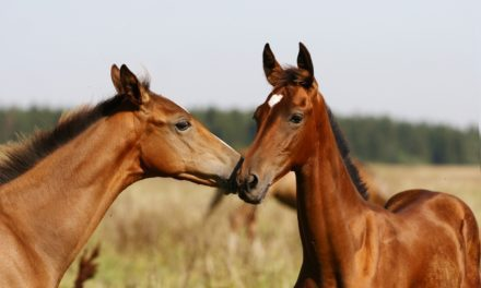 Parasite Control in Young Horses