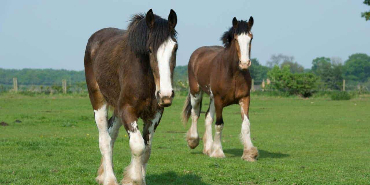 Researchers Compare Different Types Of Horses Temperaments The Horse
