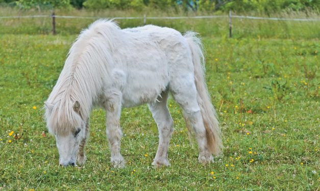 Managing Horses With PPID