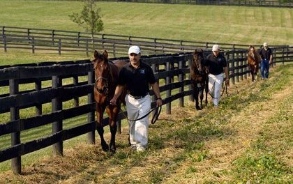 Equine Farm Workers: Employees or Independent Contractors?