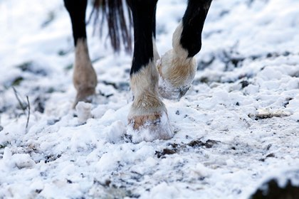Preventing Ice-Related Pasture Injuries in Horses