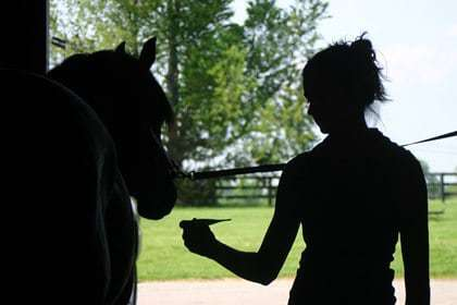 Neurologic EHV-1 Confirmed in Four Ontario, Canada, Horses