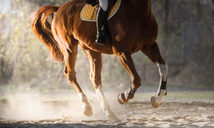 Webcast: Joint Disease in the Adult Horse
