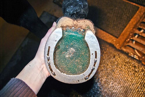 A Window Into Your Horse's Sole – The Horse