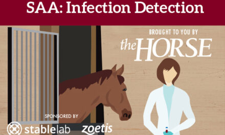 Infographic: SAA: Infection Detection in Horses