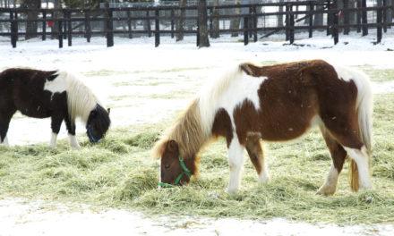 Do Horses Need Hay Around the Clock?