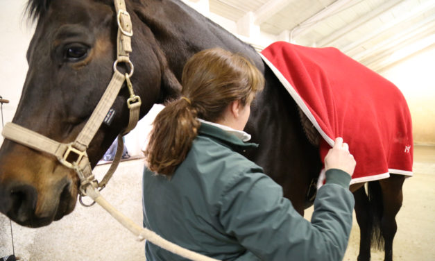 Cooling Your Horse Out on Cold Days