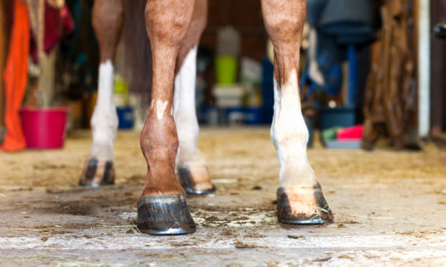 What Shape Are My Horse's Feet In?