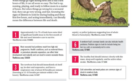 15 Facts About Assessing the Neonatal Foal's Health