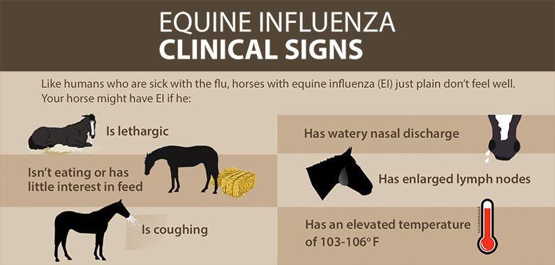 Image result for EQUINE FLU