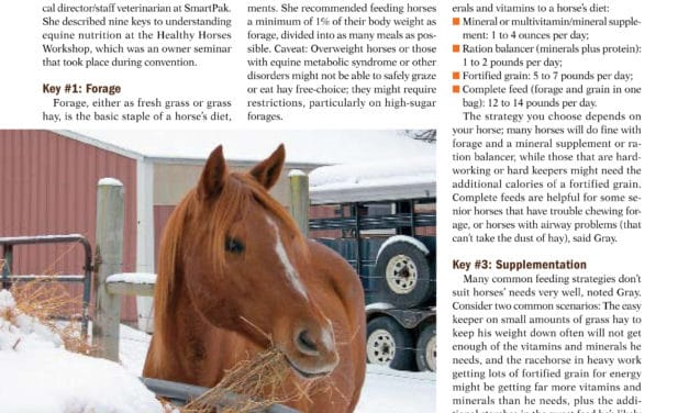 9 Keys to Equine Nutrition