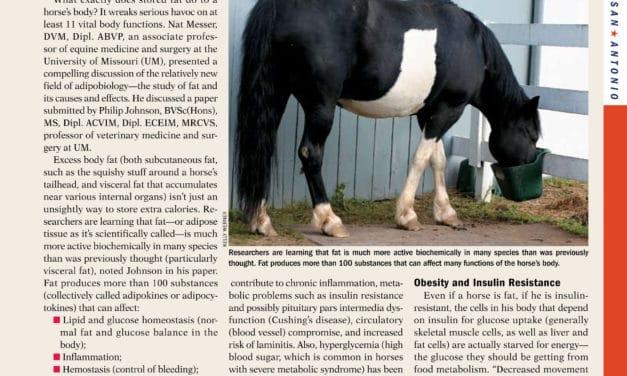 Obese Horses