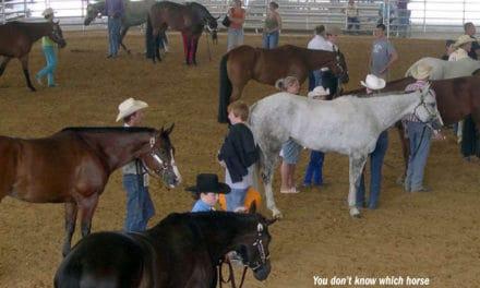 Equine Herpesvirus Seminar