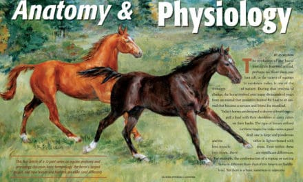 Anatomy and Physiology: Complete Series