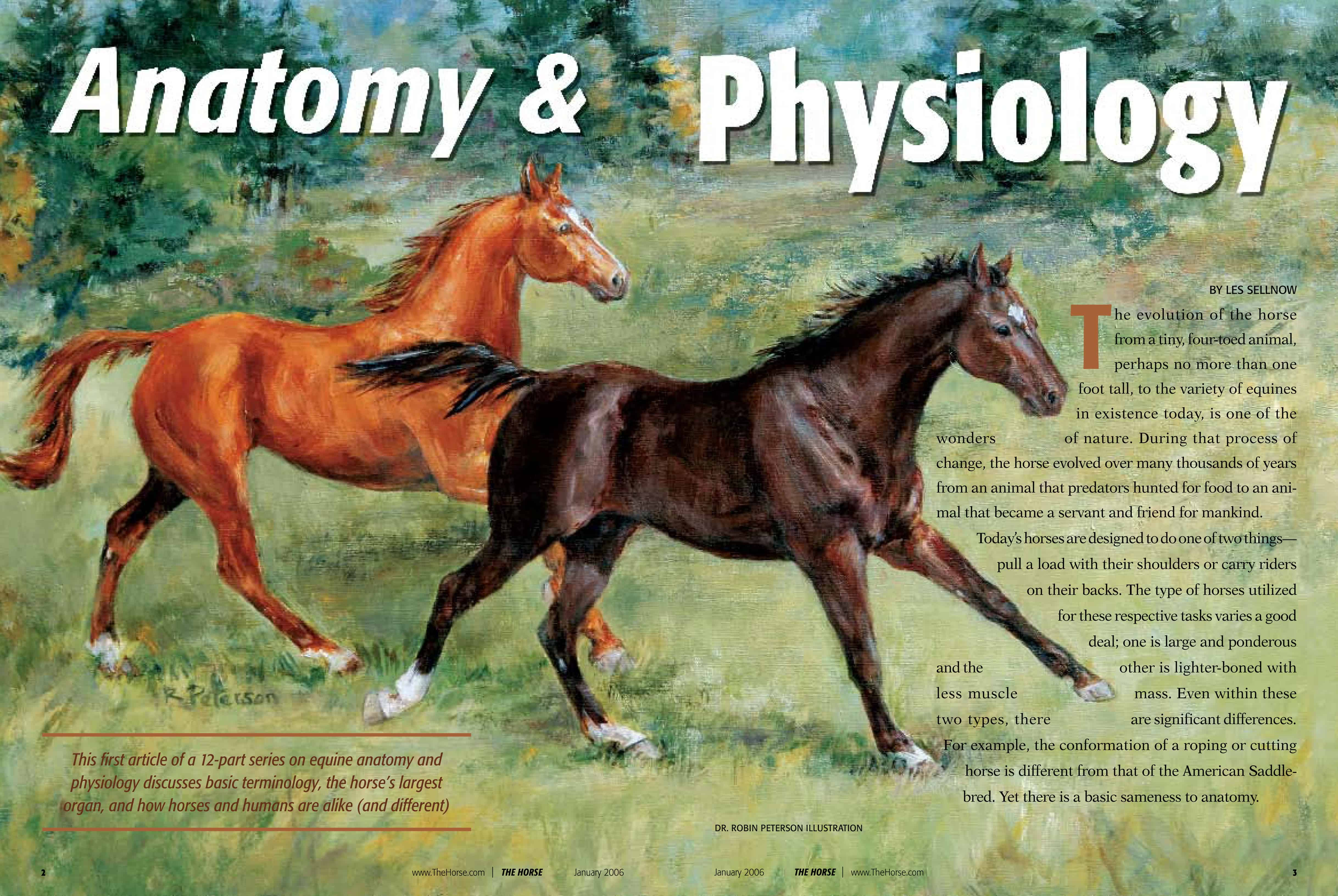 Anatomy and Physiology – The Horse