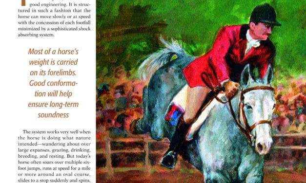 The Foreleg of the Horse: On The Forehand