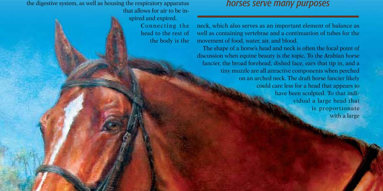 Anatomy -- The Head and Neck – The Horse