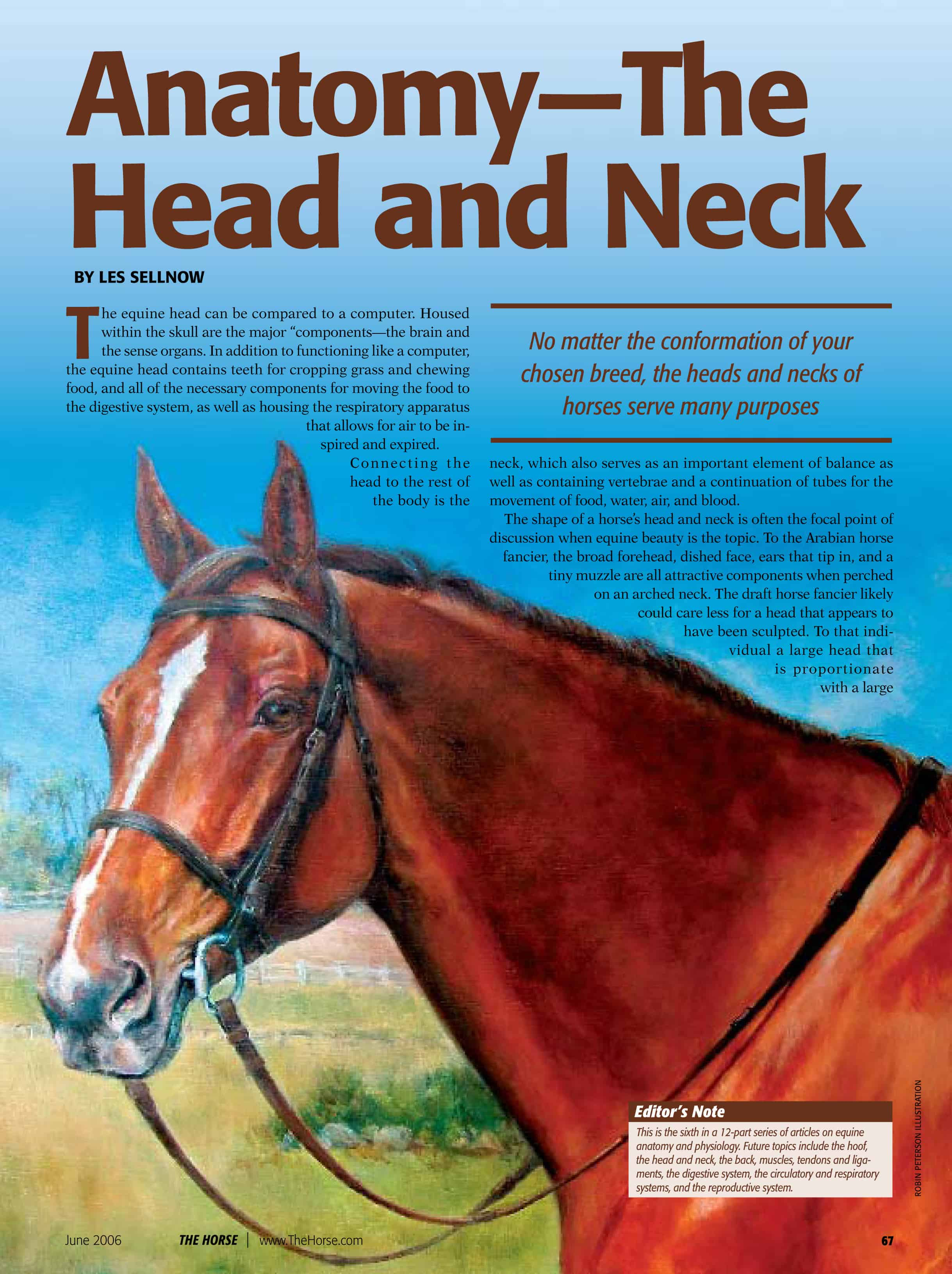 Anatomy The Head And Neck The Horse