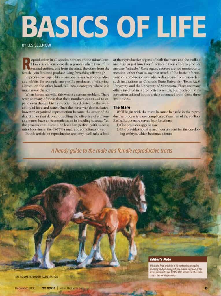 Reproductive Anatomy: Basics of Life – The Horse