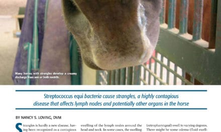 Controlling Strangles in Horses