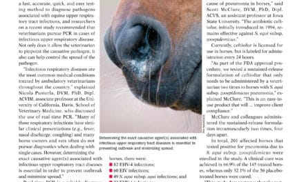 Respiratory Issues in Horses