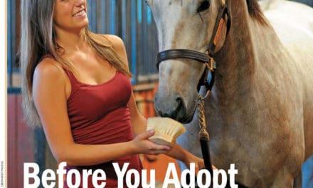 Horse Adoption Part 1: Before You Adopt