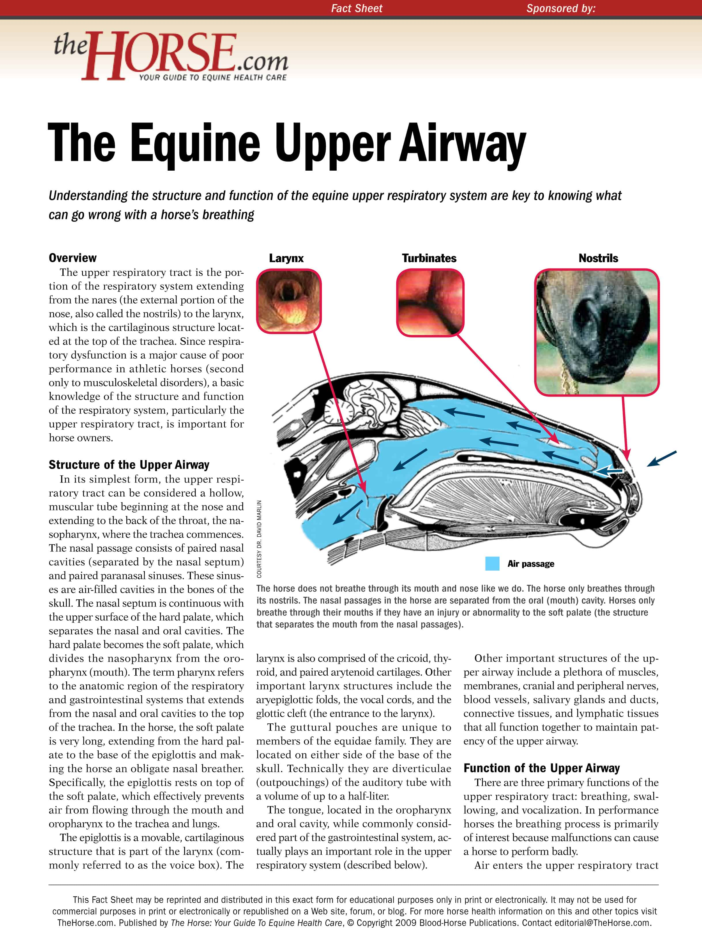 Equine Upper Airway – The Horse