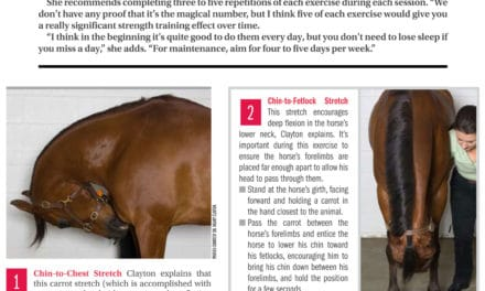 Top 5 Stretches for Healthy Horses