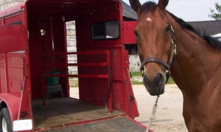 Can Horses Be Taught to Pee on Command?