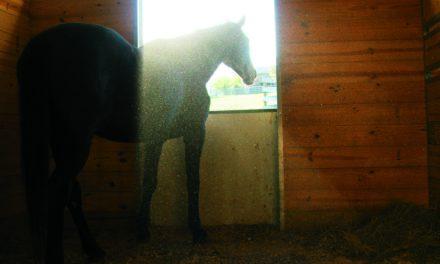 Avoiding Respiratory Problems in the Barn