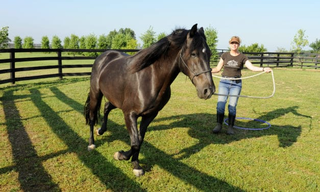 Horse Trainer or Behaviorist: What's the Difference?