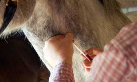 EIA in Texas Horses: Cases Confirmed in Kaufman, Webb Counties