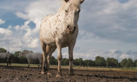 Mud Management and Equine Health