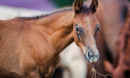 What Does My Weanling Need to Eat?