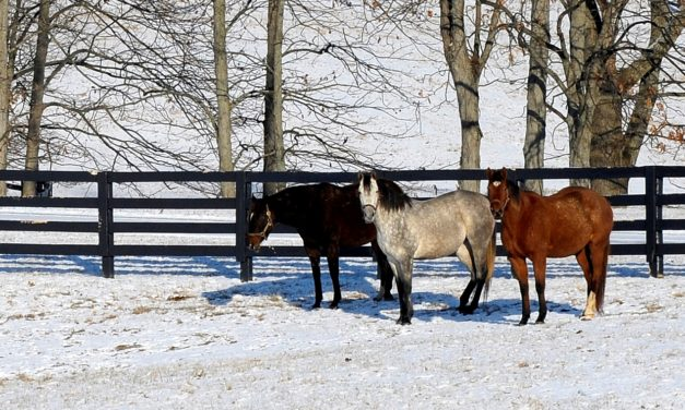 Commentary: The Importance of Identifying the Cause of Equine Abortions
