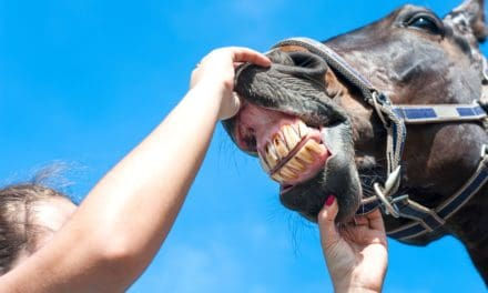 The Unique Equine Gingiva: Special Gums for Special Teeth