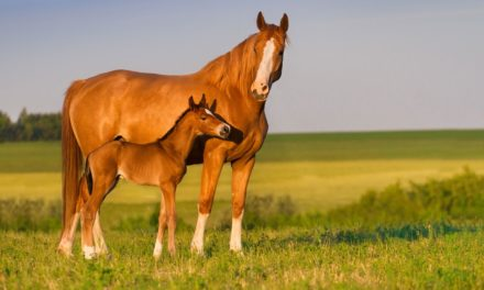 So, You Want to Breed Your Mare!