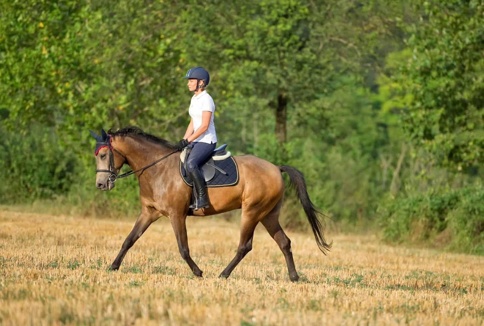 Conditioning Horses for Peak Performance