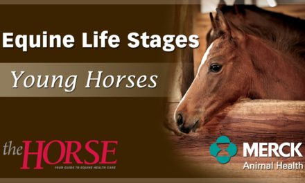 Why Might a Fast-Growing Young Horse be a Concern?