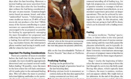 Foaling