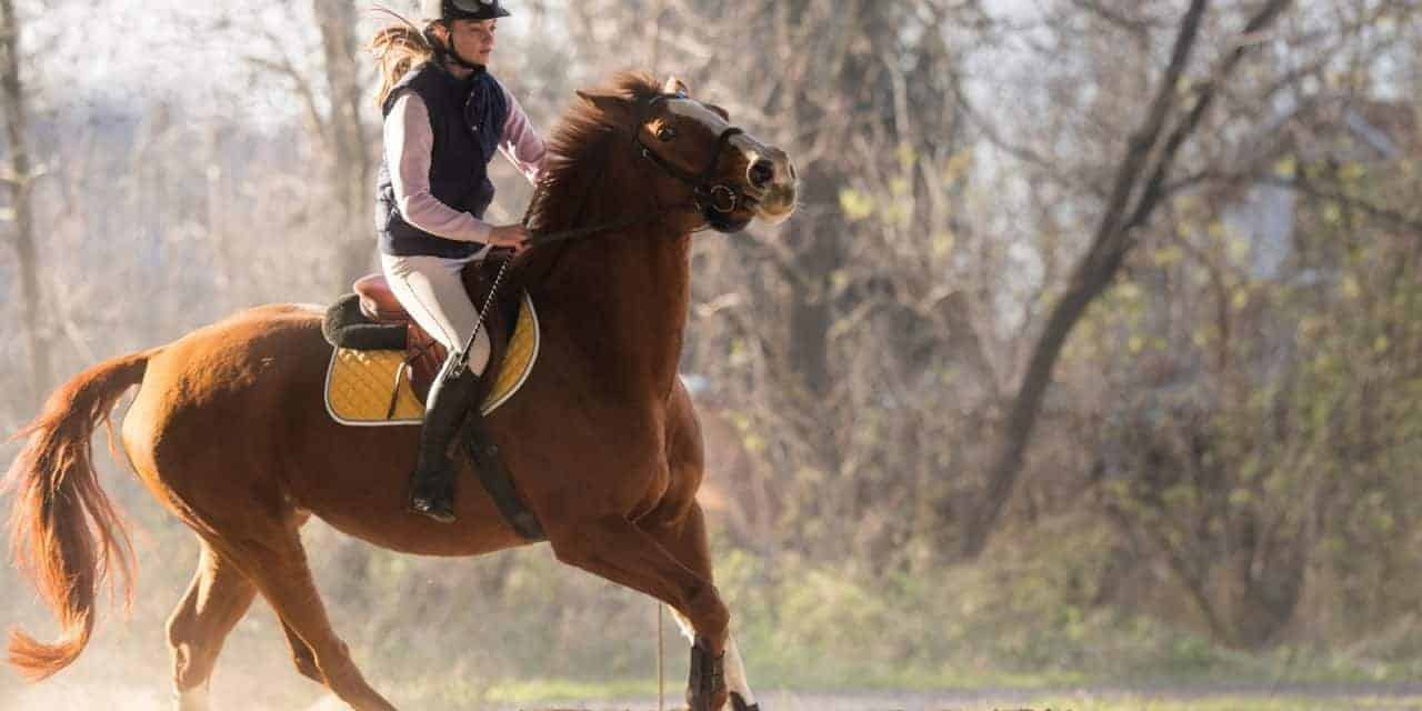 Research on Pain Scoring System for Ridden Horses Continues