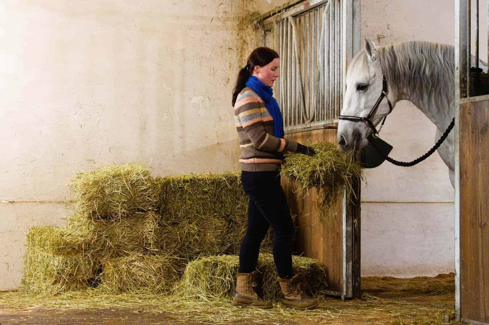 30 Years of Equine Nutrition Research: What Have We Learned? – The Horse