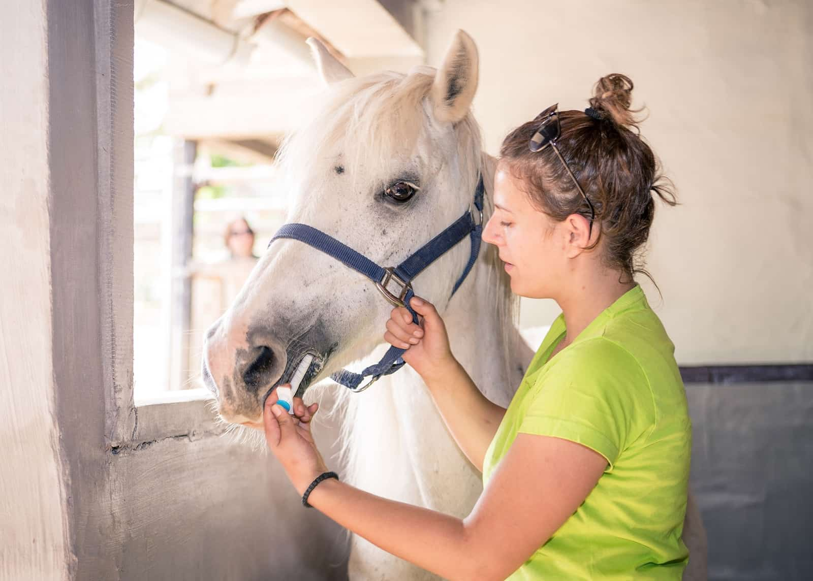 Can I Maintain My Semi-Retired Horse on an NSAID