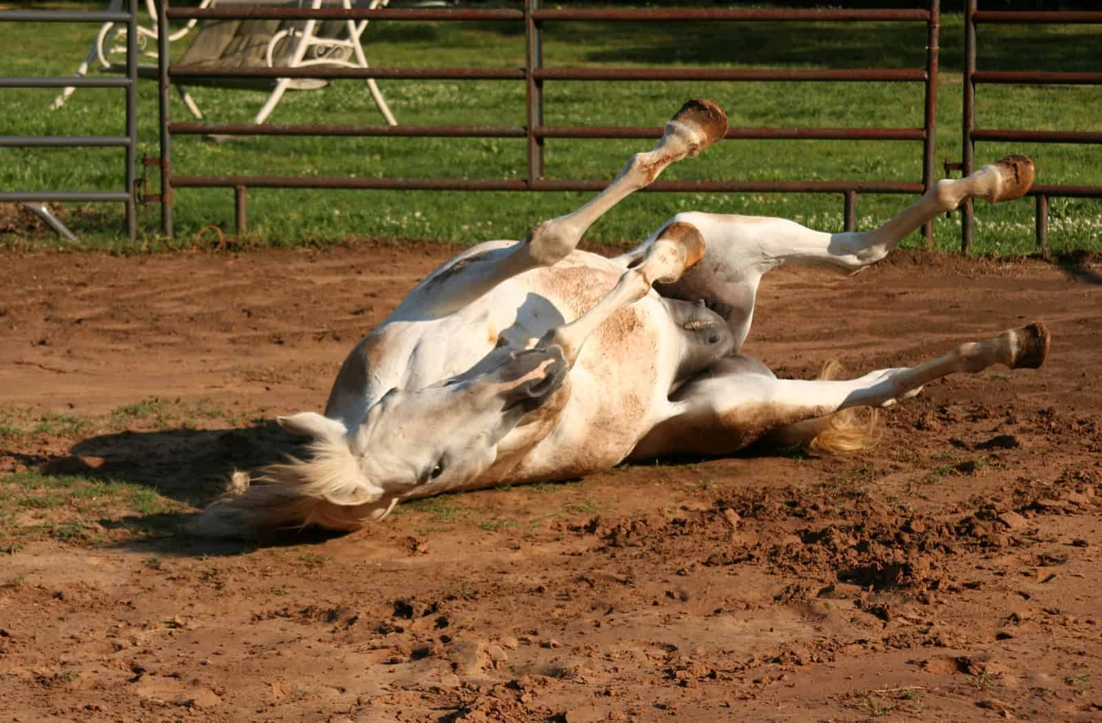 Are Old Horses More At-Risk for Colic?