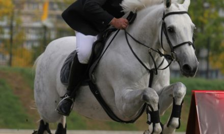 Training Equine Athletes for Health, Fitness, and Longevity