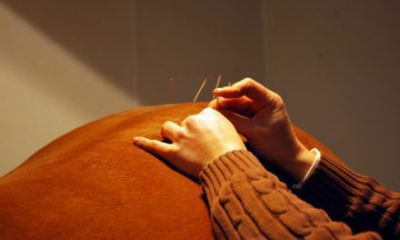 Getting to the Point: Equine Acupuncture