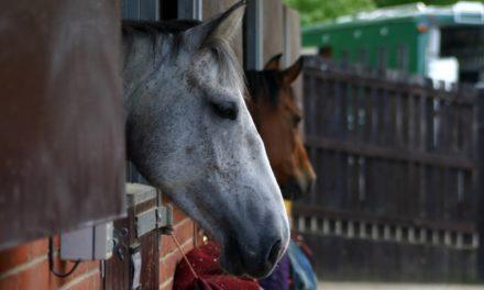 International Equine Disease Report, Fourth Quarter 2018