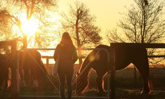 Poll Recap: Does the Time Change Affect Your Horse Schedule?