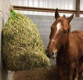Could Overweight Equids Benefit From Teff Hay?